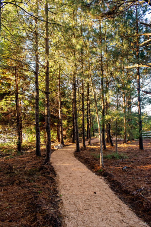 Pine Tree Walking Trail North Carolina Trail Builder