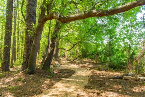 Oak Tree Trail Art North Carolina Trail Builder