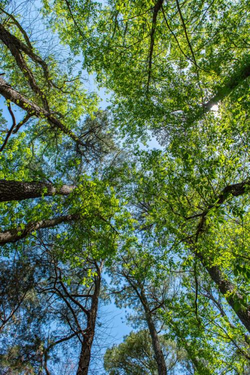 North Carolina Tree Canopy North Carolina Trail Builder