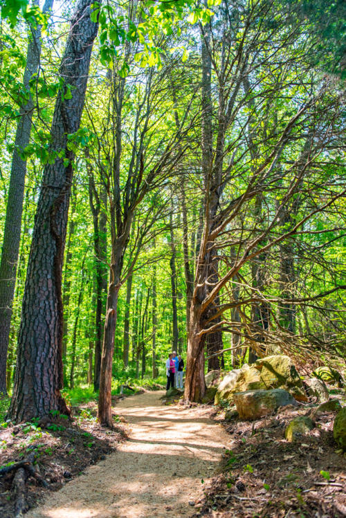 Cedar Tree Grove Walking Trail North Carolina Trail Builder