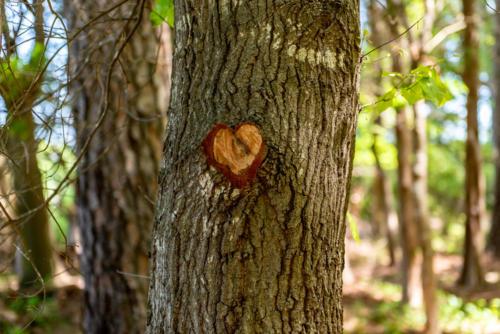 Nature Loves Us Back! North Carolina Trail Builder