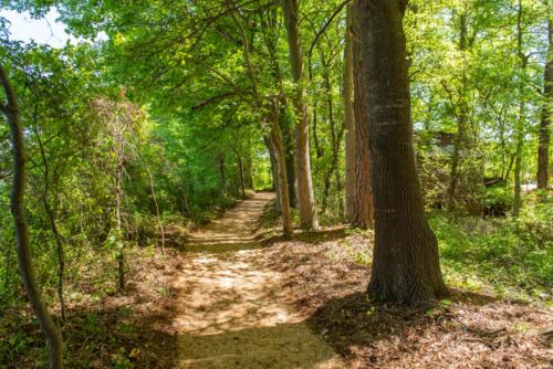 Shaded Walking Trail North Carolina Trail Builder