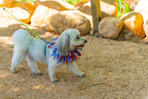 NC Dog Park and Walking Trail