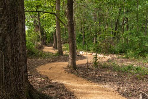 Wandering Trail